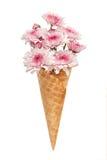 Pink chrysanthemum ice cream cone flower beautiful fresh Stock Photo