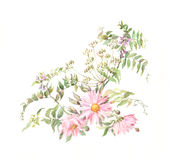 Pink chrysanthemums with grass. The hand painted watercolor of pink chrysanthemums with grass Stock Photo