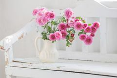 Free Pink Chrysanthemums In Jug On Old  White Wooden Bench Stock Photo - 162049570