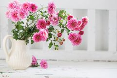 Free Pink Chrysanthemums In Jug On Old  White Wooden Bench Stock Images - 162049614