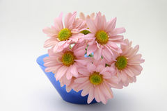Pink chrystanthemums Royalty Free Stock Image