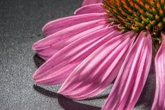 Pink close up Stock Image