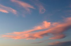 Pink clouds. Wispy pink clouds against blue sky suggesting sunset Stock Image