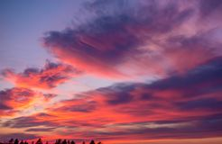 Pink clouds at a sunset Stock Images