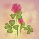Pink Clover Royalty Free Stock Photography