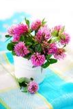 Pink clover bouquet Stock Photos
