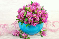 Pink clover bunch Stock Photo