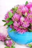 Pink clover bunch Stock Photos