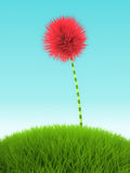 Pink clover flower in the grass on blue background Stock Images