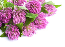 Pink clover flower isolated Stock Photo