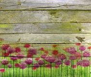 Pink clover on wooden planks. Collage with pink clover flowers and wooden planks background Stock Image