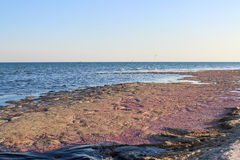 Pink coast of the island in the Black Sea Royalty Free Stock Images