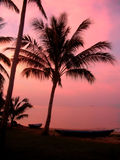 Pink Coconuts. Silhouette of coconut tree against pink sunset backdrop, Thai fisherman boats Royalty Free Stock Image
