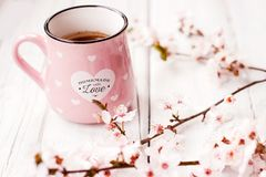 Pink coffee mug and white cherry flowers; spring background stock photo