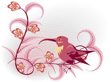 Pink colibri Stock Photography