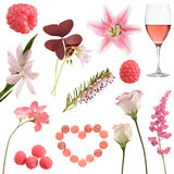Pink collection Royalty Free Stock Photo