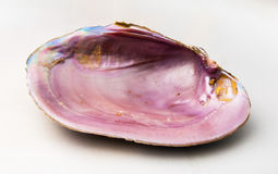 Pink color of Abalone (Pao Hua Sea Shell) Stock Images