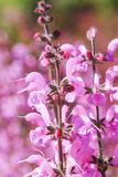 Purple & pink color bouquet of flowers in meadow. Magic pink flower on co. Lorful background at spring or summer season. Blooming fragile plants in the park royalty free stock images