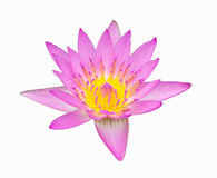 Pink color lotus Royalty Free Stock Photography
