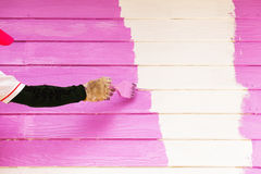 Pink color painting wall Royalty Free Stock Image