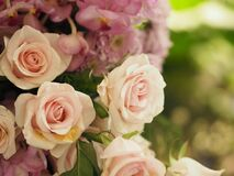 Free Pink Color Rose Flower Arrangement Beautiful Bouquet On Blurred Of Nature Background Symbol Love For Valentine Day And Love Theme Royalty Free Stock Image - 169565096