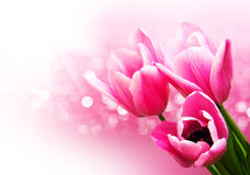 Pink colored tulip flowers. On a bokeh background stock photo