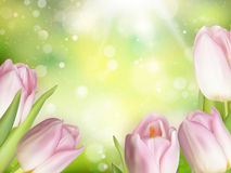 Pink colored tulips. EPS 10. Blurred background of Pink colored tulips. EPS 10 vector file included Stock Images