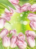 Pink colored tulips. EPS 10. Blurred background of Pink colored tulips. EPS 10 vector file included Royalty Free Stock Photo
