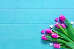 Pink colorful tulips over a blue background, in a flat lay composition with copy space Stock Photography