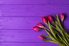 Pink colorful tulips over a purple background. In a flat lay composition with copy space Stock Images