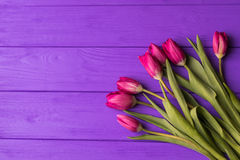 Pink colorful tulips over a purple background. In a flat lay composition with copy space Royalty Free Stock Photography