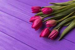 Pink colorful tulips over a purple background, in a flat lay composition. With copy space Royalty Free Stock Photography