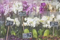 Pink colour orchids for sale. Royalty Free Stock Images