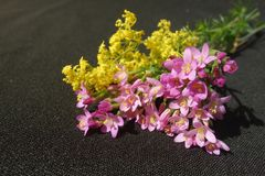 Pink and yellow wild flowers royalty free stock photos