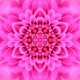 Pink Concentric Flower Center Mandala Kaleidoscope Stock Images
