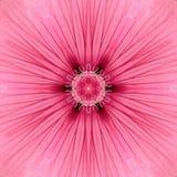 Pink Concentric Flower Center Mandala Kaleidoscope Stock Image