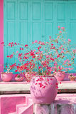 Pink cooked terra cota pot with red and pink flowers, house front with pink and green color Royalty Free Stock Image