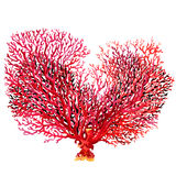 Pink coral isolated on white background. Pink coral isolated, watercolor painting on white background Stock Photo