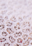 Pink coral with sand grains Royalty Free Stock Photography