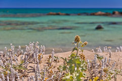 Pink coral sand and turquoise water, Crete Stock Photo