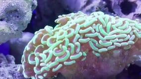 Pink coral underwater stock video footage
