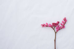 Pink coral vine budding flowers with brown branch Royalty Free Stock Photography