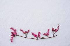 Pink coral vine budding flowers with brown branches Royalty Free Stock Photo