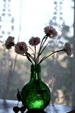 Pink cornflowers. In a bottle stock photo