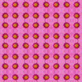 Pink cosmos background Royalty Free Stock Images