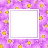 Pink Cosmos Flower Banner Card. Vector Illustration.  royalty free illustration