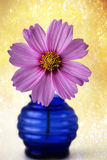 Pink Cosmos flower in blue vase Royalty Free Stock Image