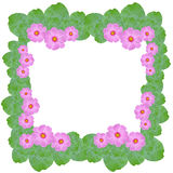 Pink cosmos flower and green leaves frame Stock Photo