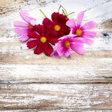 Pink cosmos flower on old a wooden background Stock Photos