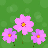 Pink cosmos flower vector Royalty Free Stock Photos